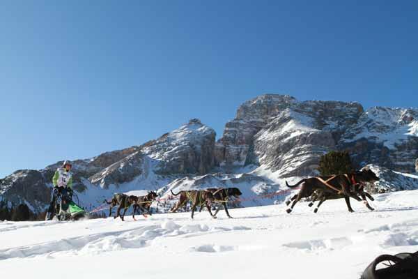 Schlittenhunde Alpentrail 2012