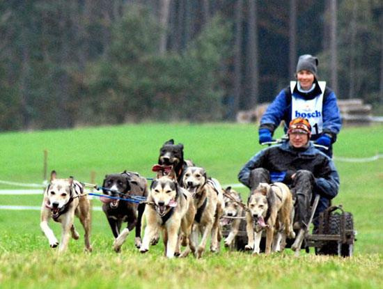 Blindenführhunde im Fichtelgebirge