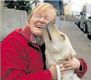 Blindenfuehrhund-Labrador-Maja