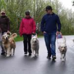 Blindenführhundhalter gehen ihren Weg