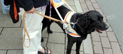 Dienstag, 5. August, 16:05 Uhr Tanja Kohl, Trainerin für Blindenführhunde aus Dieburg