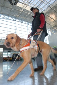 Führhund am Flughafen