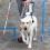 Seminar: Lernen Sie Blindenführhunde auszubilden